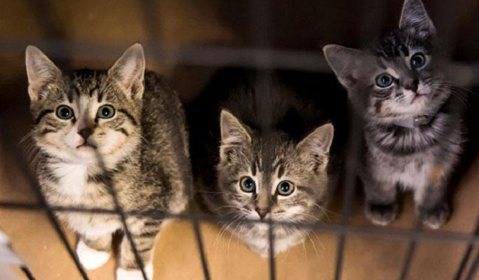 2 New York cats become the first U.S. pets to test positive for coronavirus